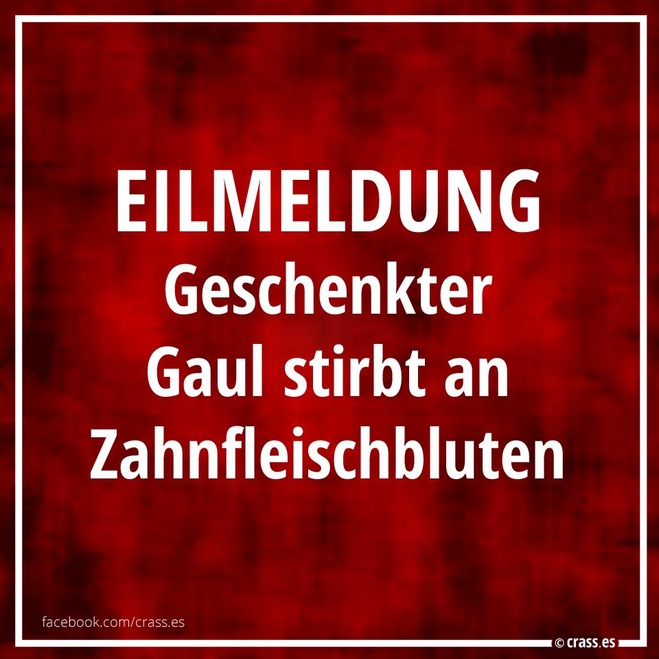 Eilmeldung: Geschenkter Gaul Stirbt An Zahnfleischbluten